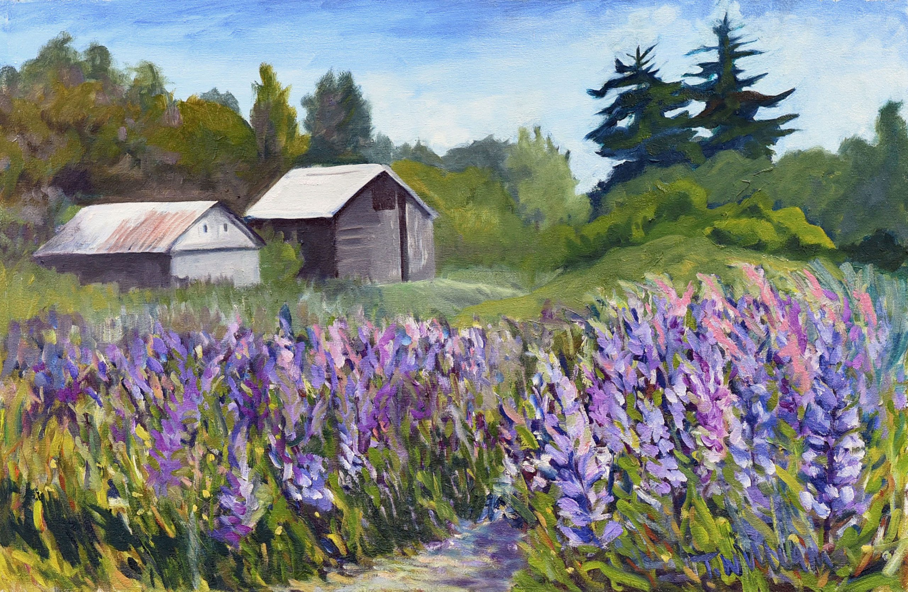<h2>Lupin Frenzy Campbell Valley<br />20 x 30</h2>